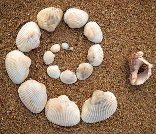 Shell spiral photo