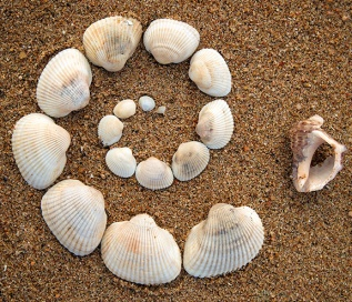Shell spiral photo
