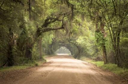 Walkway through the woods